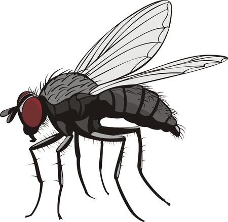 One Fly Can Change The World | Sachem Pest Control